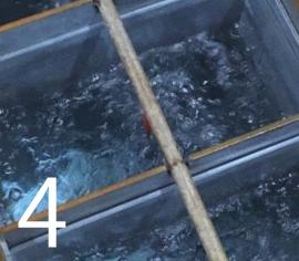 缶にパイプを設置し、空気を送り込み水を攪拌させながらゆっくり48時間かけて凍らせる